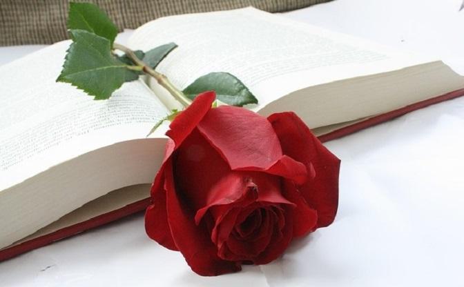diada sant jordi libro y rosa